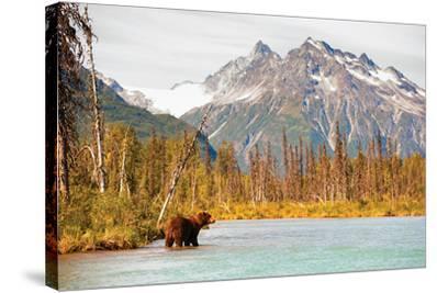 Natural Splendors Alaska IV