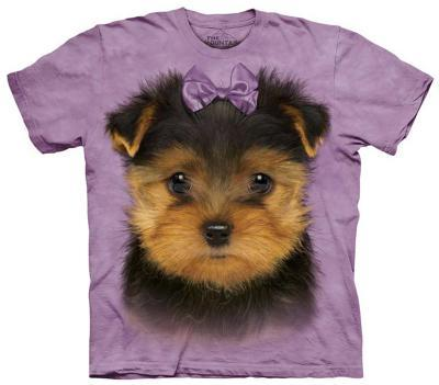 Youth: Yorkshire Terrier Pup