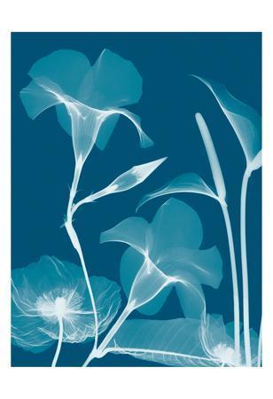 Transparent Flora