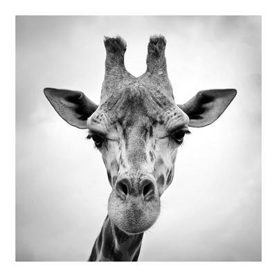 Giraffe Art At Allposters Com