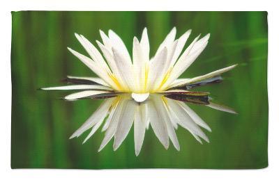 Water Lily Blooming, Okavango Delta, Botswana