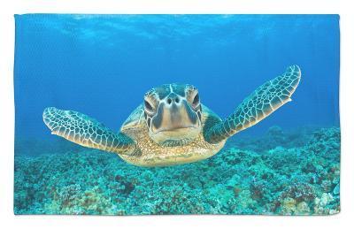Green Turtle (Chelonia Mydas), Maui, Hawaii, USA