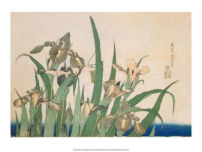 Irises and Grasshopper