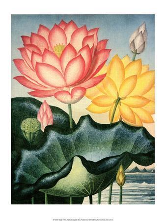 Botanical Print, The Sacred Egyptian Bean