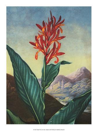 Botanical Print, Indian Reed