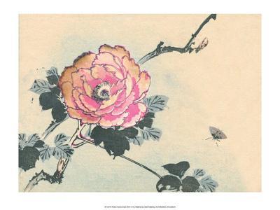 Japanese Peony Flower