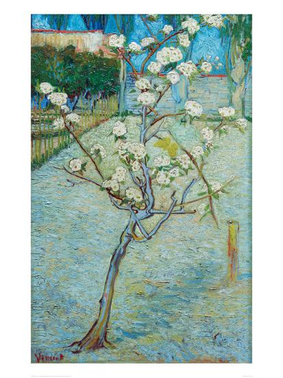 Blossoming Pear Tree Poster By Vincent Van Gogh At Allposterscom