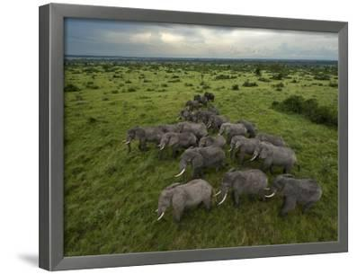 Elephants have miles of savanna to roam inside Queen Elizabeth Park.