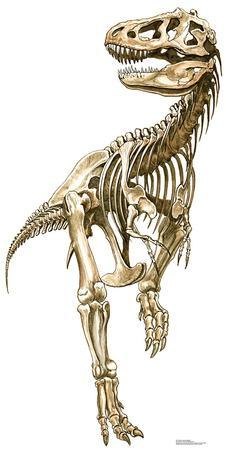 Tyrannosaurus Rex Skeleton Lifesize Standup