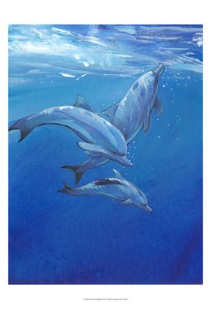 Under Sea Dolphins