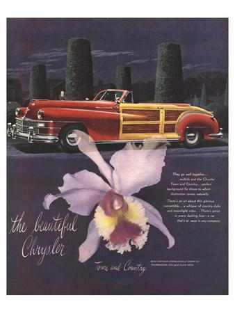 The Beautiful Chrysler-Orchid