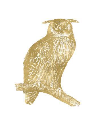 Owl Great Horned Golden White