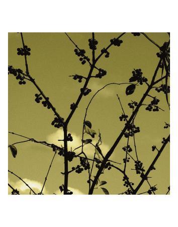 Autumn Branch (sepia) (detail)