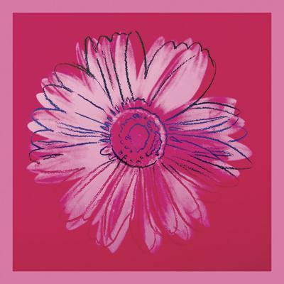 Daisy, c. 1982 (crimson and pink)