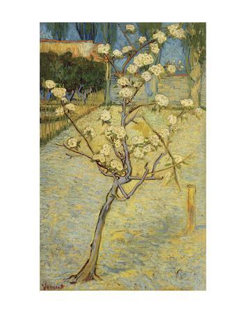 Small Pear Tree in Blossom, 1888