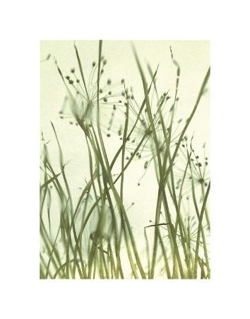 Watery Grasses 1