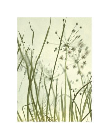 Watery Grasses 2