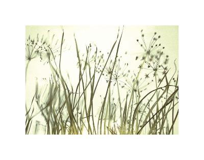 Watery Grasses 3