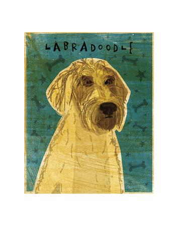 Yellow Labradoodle