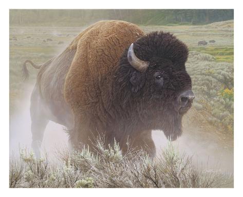 Gaining Ground by Daniel Smith Wildlife Buffalo Poster 27x22 BISON ART PRINT