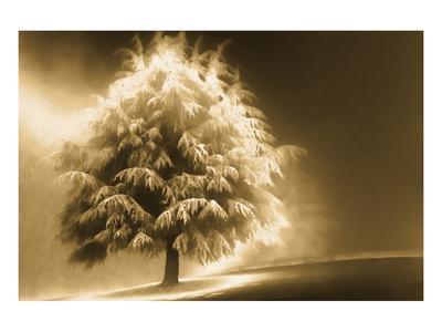Schwartz - Enlightened Tree