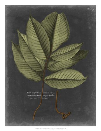 Foliage Dramatique III