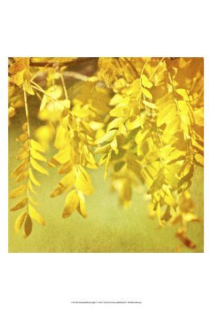Autumn Photography I