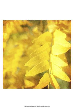 Autumn Photography III