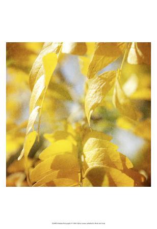 Autumn Photography V