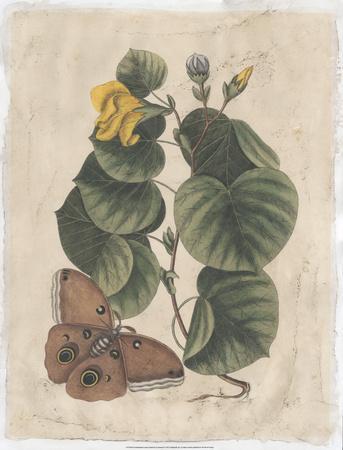 Embellished Catesby Butterfly & Botanical I