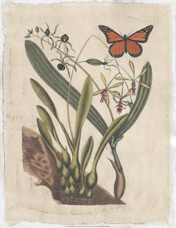 Embellished Catesby Butterfly & Botanical IV