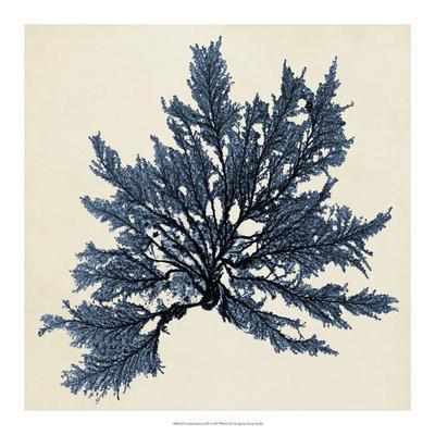 Coastal Seaweed IX