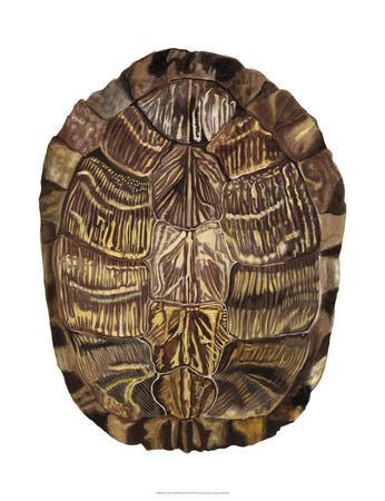 Tortoise Shell Detail I