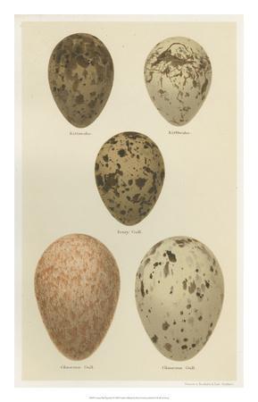 Antique Bird Egg Study IV