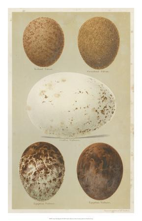 Antique Bird Egg Study III