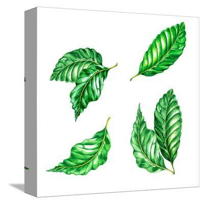 Exotic Ficus Watercolor Leaves