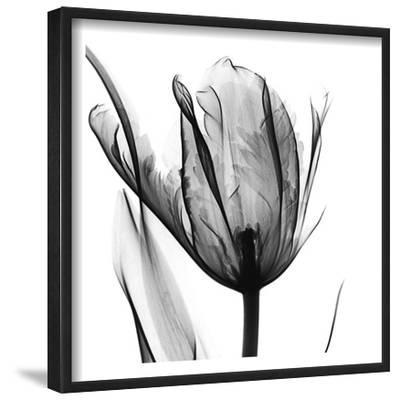 High Contrast Tulip