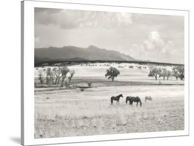 Ranchland #9A