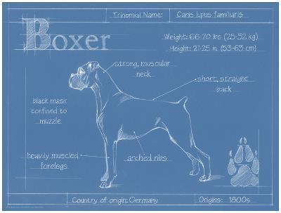 Blueprint Boxer