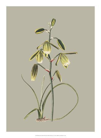 Botanical Cabinet IX