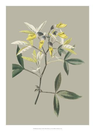 Botanical Cabinet VI