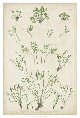 Bradbury Ferns I