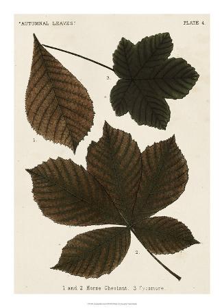 Autumnal Leaves III