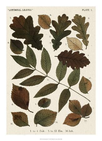 Autumnal Leaves V