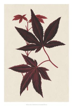 Japanese Maple Leaves I