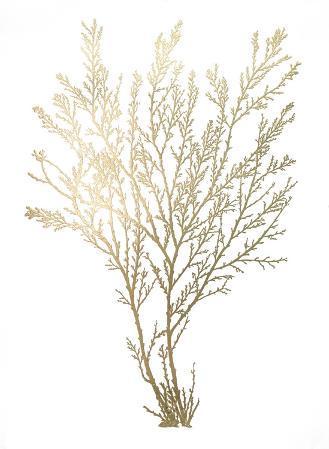 Gold Foil Algae I