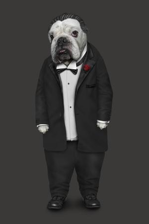 Dog Father (Pets Rock)
