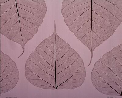 Sheer Leaves II