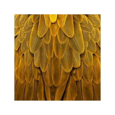 Feathered Friend - Golden