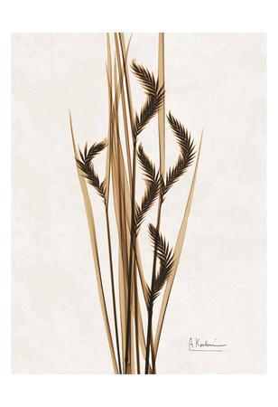 Aged Oat Grass